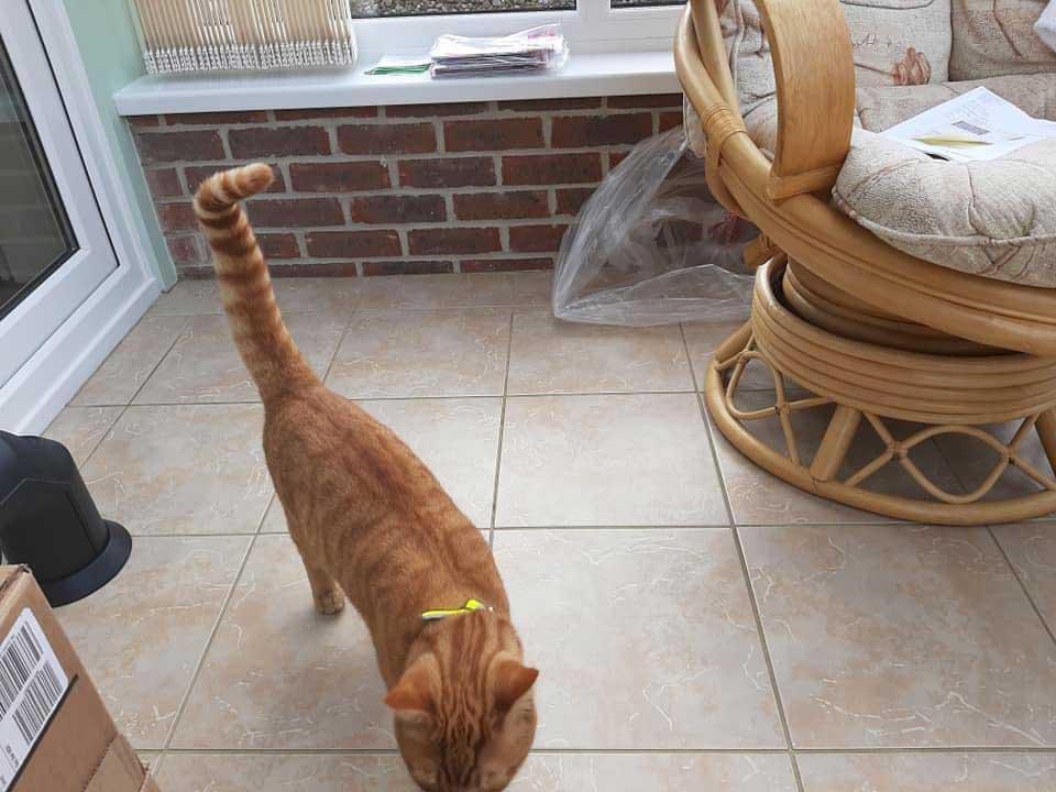 cat walk 38 km visit old neighbor
