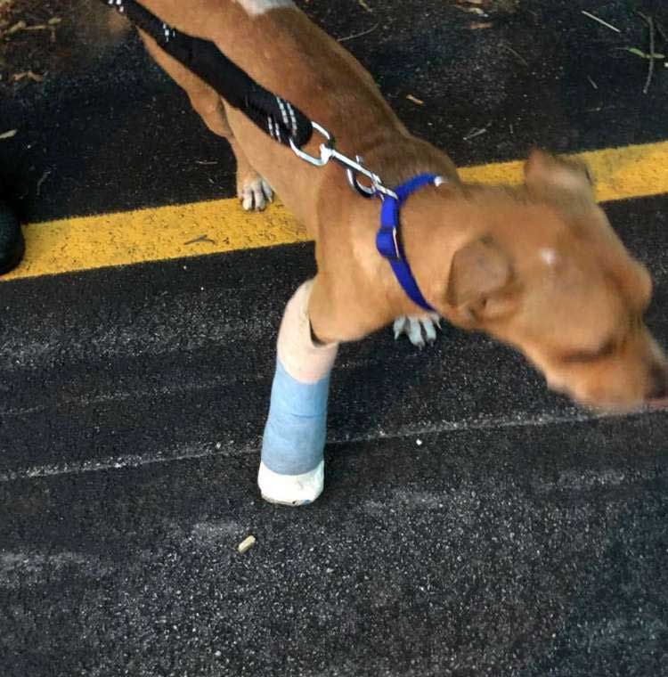 cyclist finds injured dog carried his back