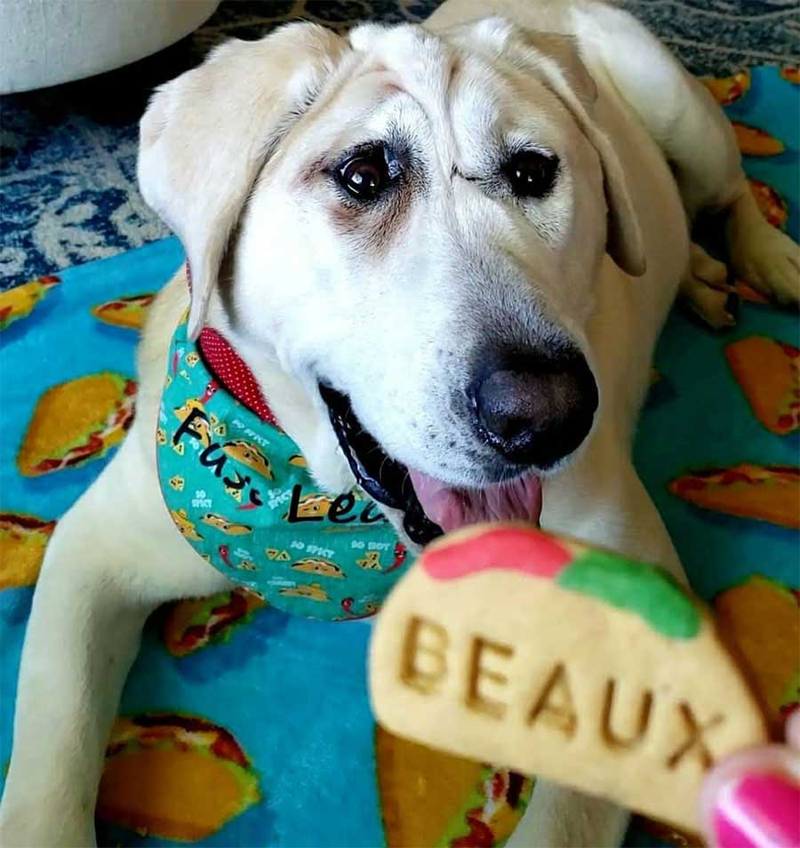 dog abandoned several times woman sees beauty