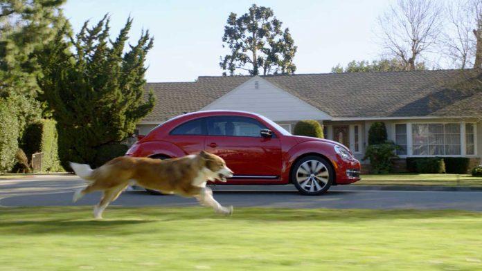 stop dog chasing car