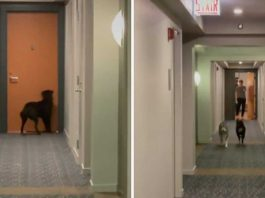 dog knocks on door best friend every night to play