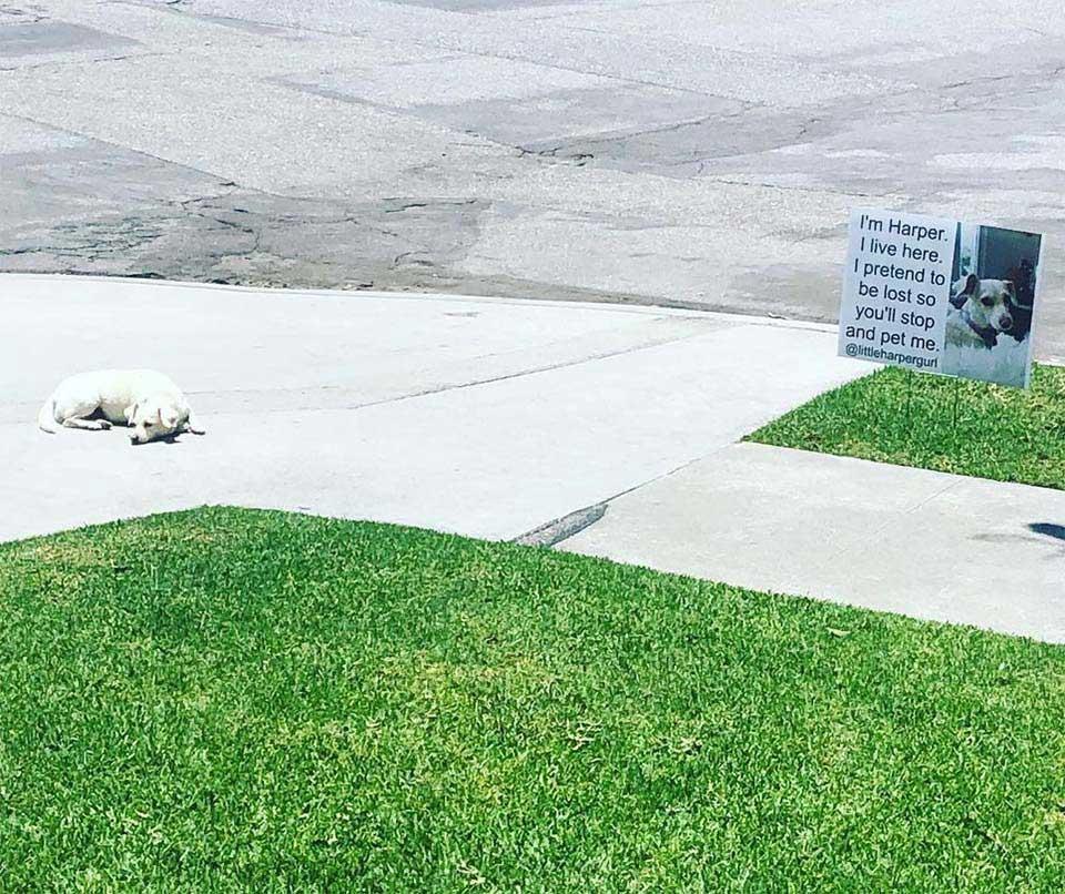 dog pretends lost people stop pet
