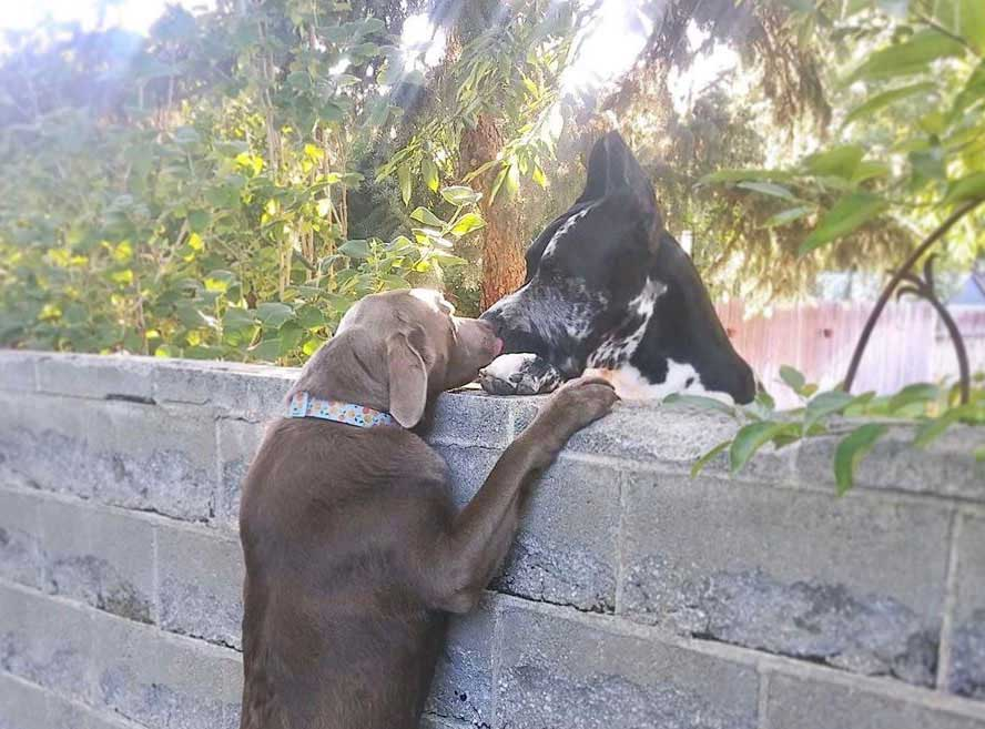 family gives stool dog visit dogs neighbors