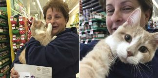 rescued cat happy adopted hug mom