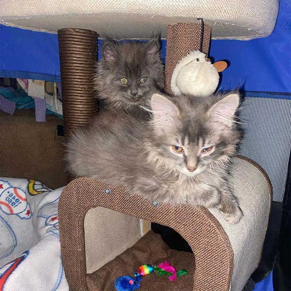 woman help stray kitten return look brother